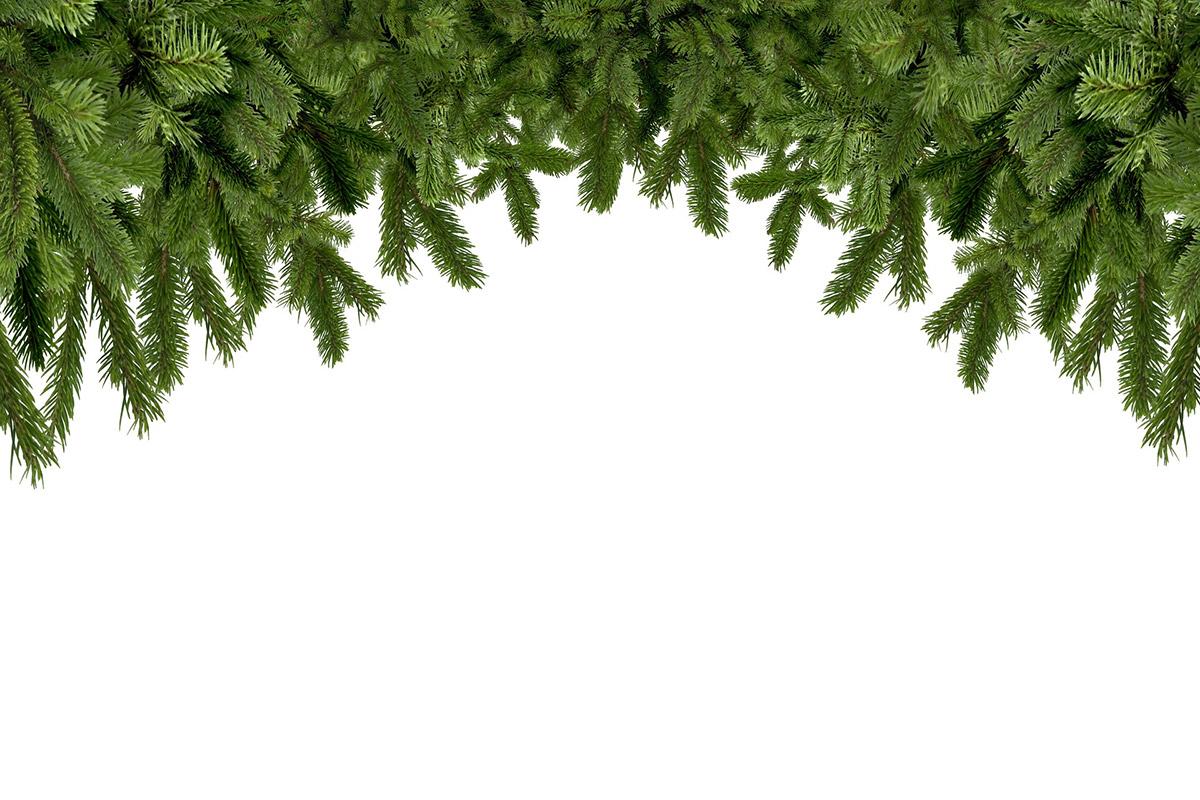 tannenbaum weihnachtskarte